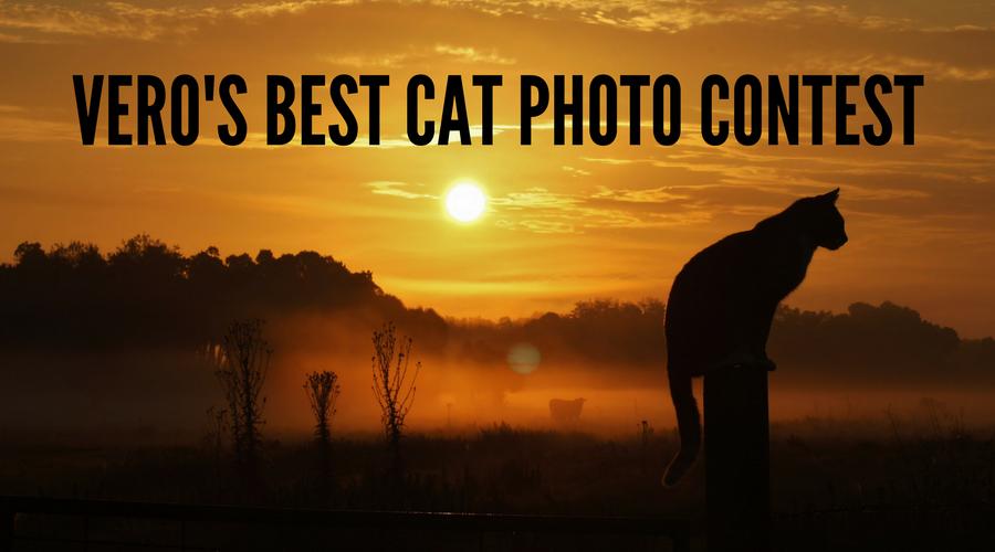 Vero's Best Cat Photo Contest